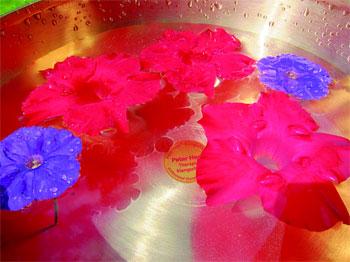 Klangmassage Schwangerschaft Blumen