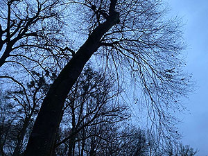 Märchen Klang Baum